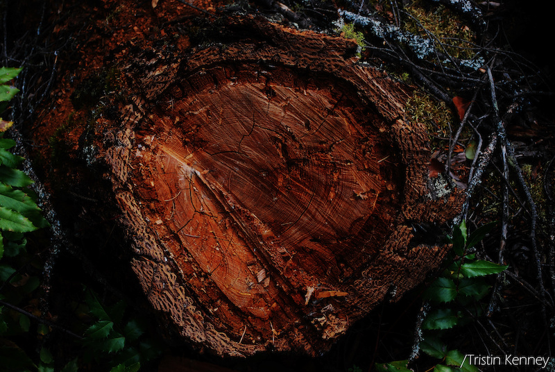 Forgotten wood