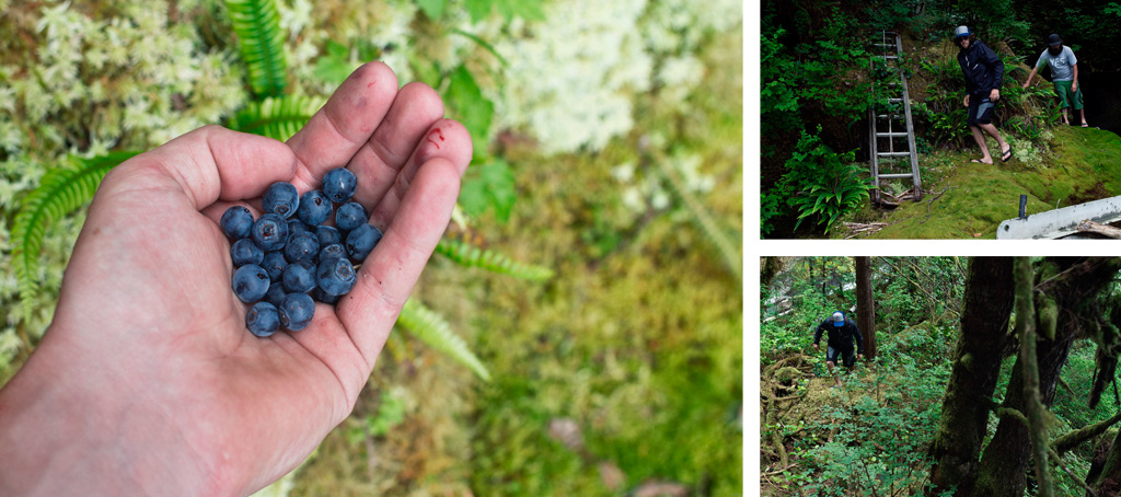 Wild blueberries paired with deep moss and incredibly thick brush.