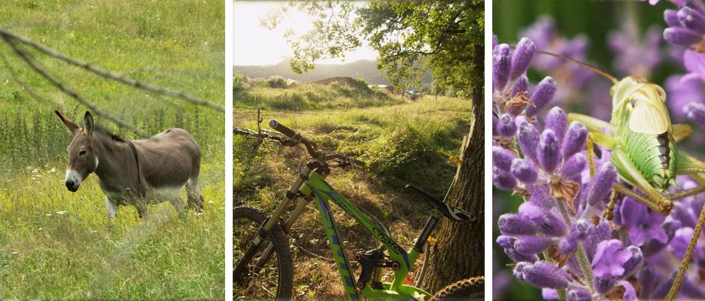 Making Of - Royal Hills Experience Photo FastFokus