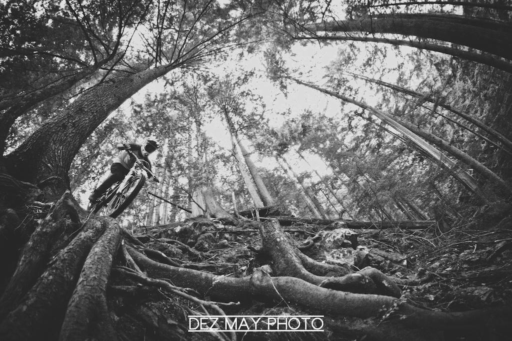 Roots - WWW.DEZMAY.COM - www.facebook.com/DezMayPhoto