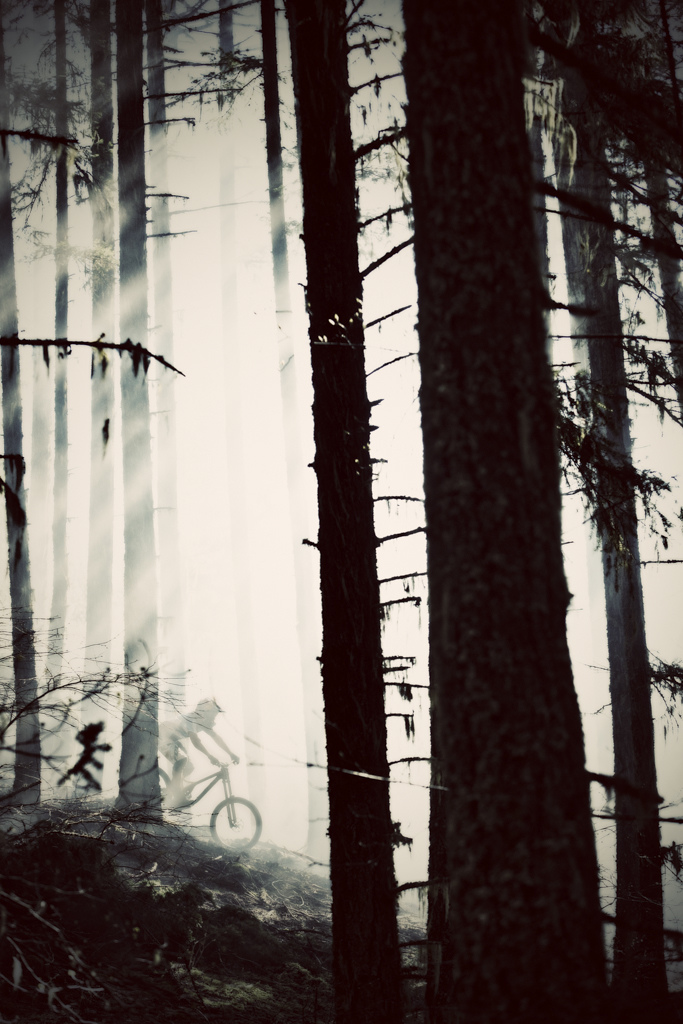 Stevie Pinned in the foggy forest