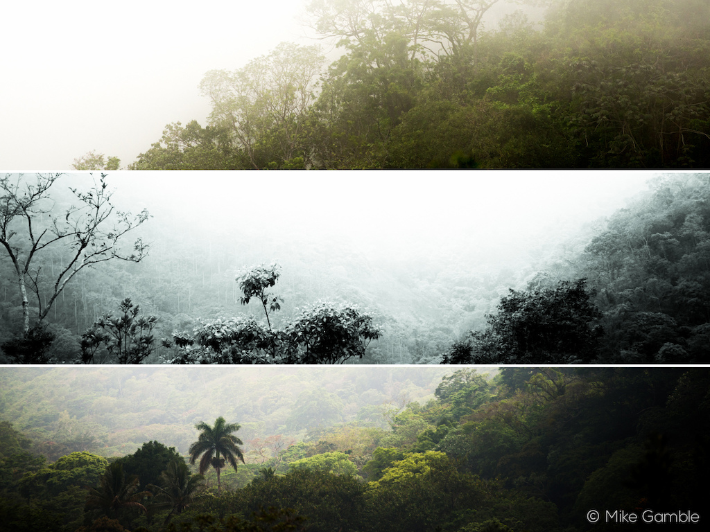 The jungle has many faces.