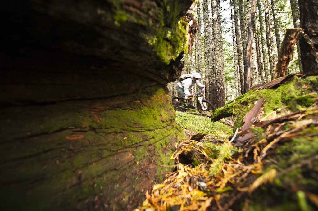 The sheer organic mass of the North Shore s forests is incredible. Our tires float over the sponge of decaying cedar logs that have become partially buried beneath untold quantities of forest matter that has been literally falling apart for centuries. As we leave the pristine world of the upper trails the forest begins to change. The trees increase in size and we enter the land of the big cedars. At any moment I expect to see a tall skinny blue creature go flitting through the branches above me. But Avatar thoughts dissolve as I fight to stay close behind Dre. He doesn t seem to want to take prisoners and rides fast. He masterfully crosses a mud pool on a stupidly skinny and slippery cedar plank and drops me. I am left behind tri-poding my way through the bog like an awkward giraffe. Lucky for me he waits ahead on a rise in the trail his breath steaming in the cold air.