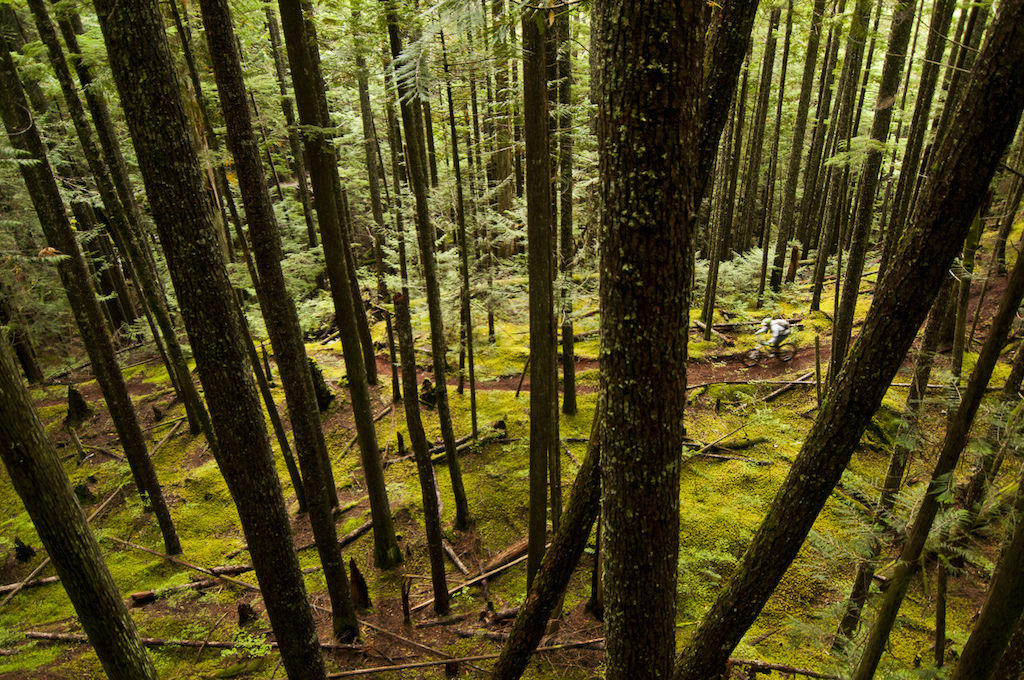 Half Whip has got that old school or hiking trail vibe going on. I think it s actually an old trials motor bike trail but I m not sure. It certainly isn t tracked out and fresh dirt is plentiful. It goes through some incredibly sweet wide open forest. You can see through the trees for a long way and there is almost zero undergrowth. Grey Ghosts which are long dead but still standing Cedar snags stand guard along the trail like silent sentinels. Roland leads the way and we flicker through the forest at high speed. We don t spend a lot of time taking photos mostly because the trail is so damn good but also because we have lots on the agenda for today.