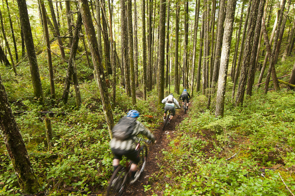Half Whip is not a short trail but it is certainly in a hurry to get you down. The trail is precipitous it is sheer and we had our brake pads about as hot as they get I m sure. My favorite part of this trail is near the middle You enter a big open area with a unique ridge feature running like a spine along this bench it s flat on either side below the spine but eventually heads sharply down into a creek ravine on the left and to a towering cliff band on the right. A steep rooty and hard-to-make climb gets you up onto the spine which is perhaps sixty vertical feet higher than the forest floor on either side. The trail follows along the middle of it a dark strip of milk chocolate bordered on either side by sickly puke colored moss. Eventually the spine terminates into more fall-line slant the earth soft and forgiving to the tires. Many of the steep sections shoot you into side-hills that invite the opportunity to spring off of roots and gap upwards landing above the trail on the up-slope sending you diving back onto the trail. The utmost care is required to avoid going for a willy-nilly dive into the stratosphere off the left hand side where certain doom awaits. Daring jumps aside I focused on Dre s pale jacket ahead trying as always to remember to look where I m going not where I am. On trails with a lot of downward-ness but also lots of rocks and lumps I often find myself stuck on staring at what immediately lies ahead of my front wheel. The trick is certainly to look much farther down the trail and watching for changes in Dre and Roland s progress ahead helped me to get a better sense of what was to come. On the switch side of that riding right behind Dre and Roland does make the actual upcoming trail surface blinder and put me in a position of having to trust and focus on the rider ahead. That is what Half Whip was all about for me that day bouncing downwards trusting Dre and Roland to stay on the trail and keep me safe