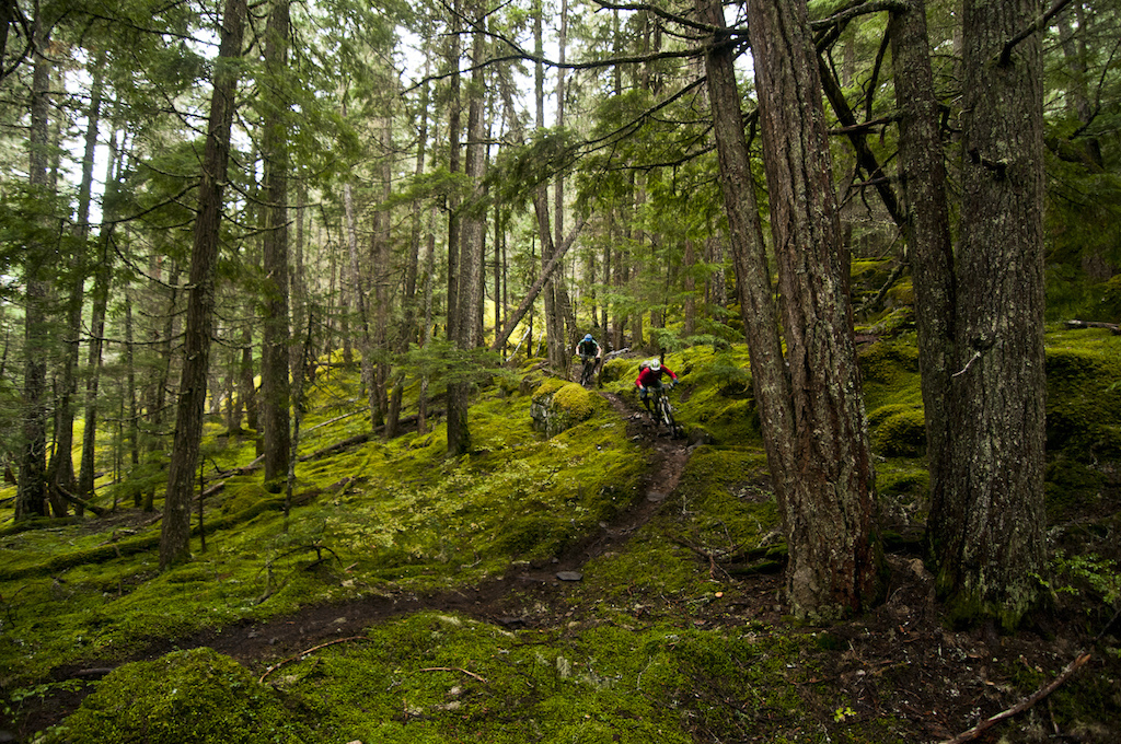 Whistler s woods have a very distinct look to them. The sub alpine forest extends from an elevation of approximately 3000 to 6000 vertical feet. Considering the Whistler Village sits at 2200 hundred feet we were probably riding at a peak elevation of perhaps 3500 feet. This forest type typically has poorer less developed soil and is generally covered in snow much earlier in the fall than the lower elevation rainforest and stays buried well into the spring and early summer. Mountain Hemlock and Subalpine Fir dominate with some scrubby cedars scratching out a living where they can. That mix of poor soil and rocky ground seems to encourage a slick grid of roots to protrude from the trail. On our ride the greasy levels were through the roof and it made for loose and sketchy riding. As we pinned down the rock strewn pitches I cheered on my Kona Process 111 a machine that lets me do pretty damn fun stuff. With 4 inches of travel twenty niner wheels Sram XO brakes Hans Dampf tires a reverb seat post and geometry that raises your spirits there is no excuse to not shred. Not long ago trails like this would ve been total DH runs. The fact that the four of us had pedaled up there on 30 pound or less bikes is just too rad. We are truly at the pinnacle of mountain biking right now it s never been better.
