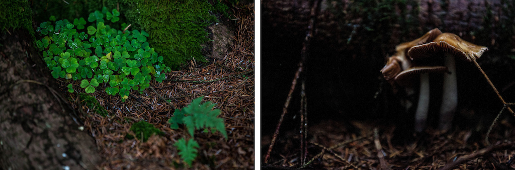 The rich contrast in tones and colours meant we had lots more shots of nature than we initially imagined.