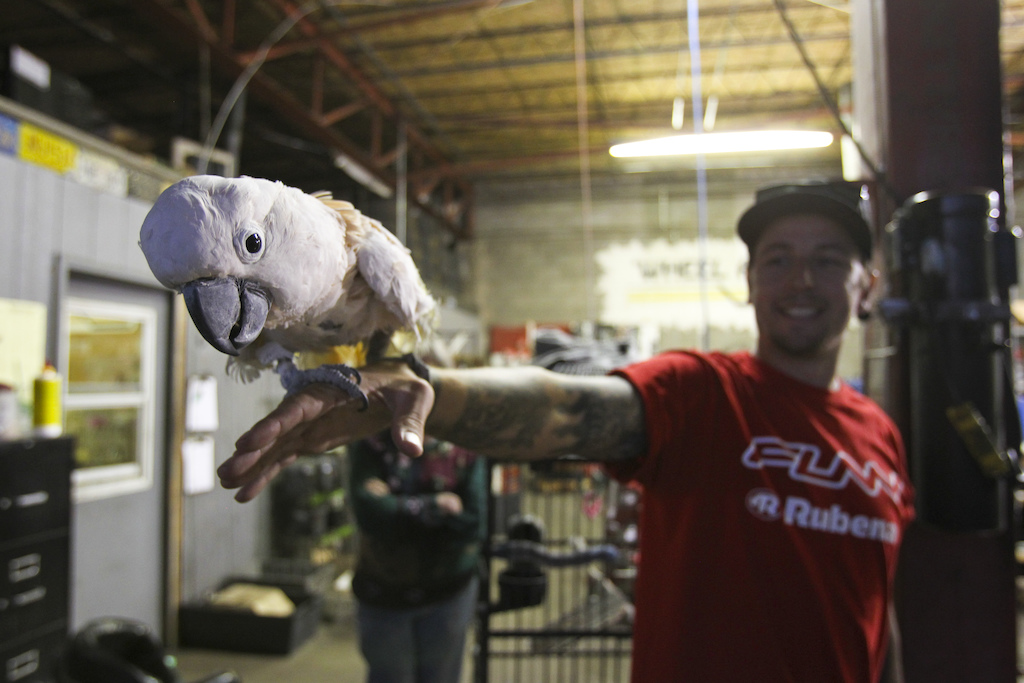 Luckily even in the garage there was lot of amusement. The parrot didn t speak but was rather friendly.