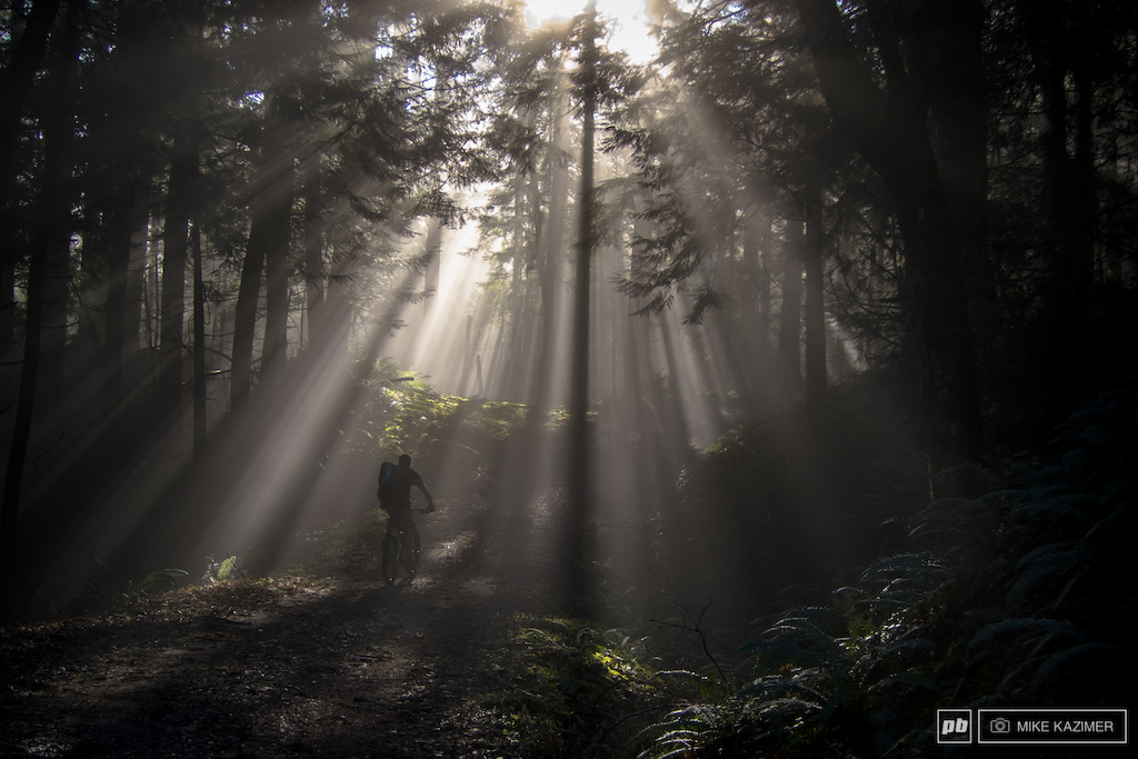Light beams in the woods.
