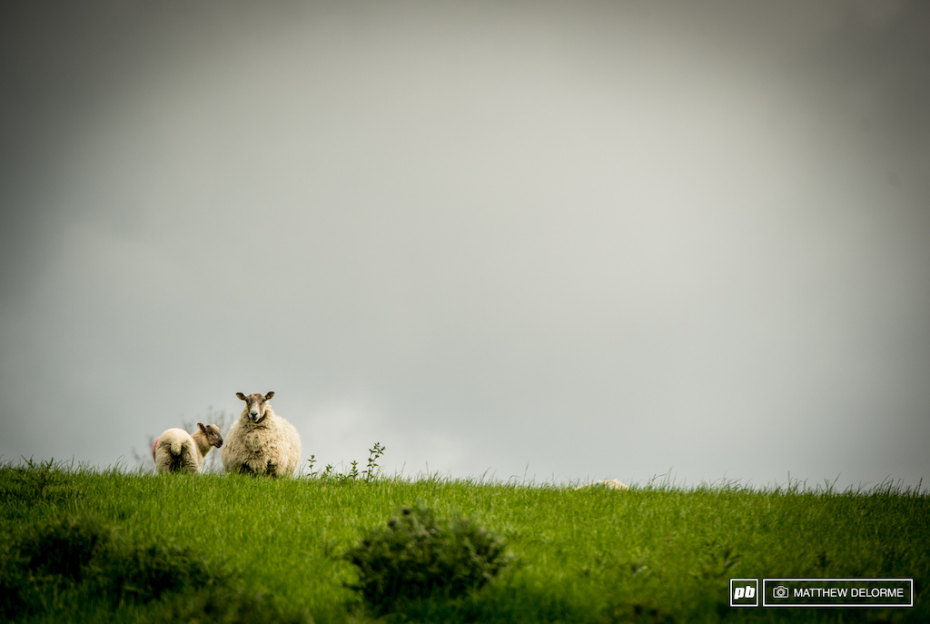 Eyes on ewe at every turn. Nearly every field here in Scotland is densely populated with sheep who keep a close watch.
