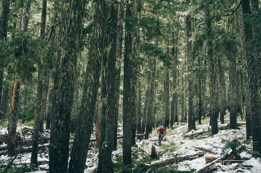 Whistler's deep and dreamy woods.