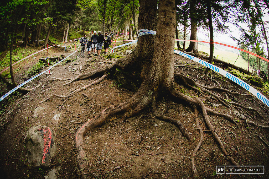 Roots?  Yeah, Meribel has them in all shapes and sizes.