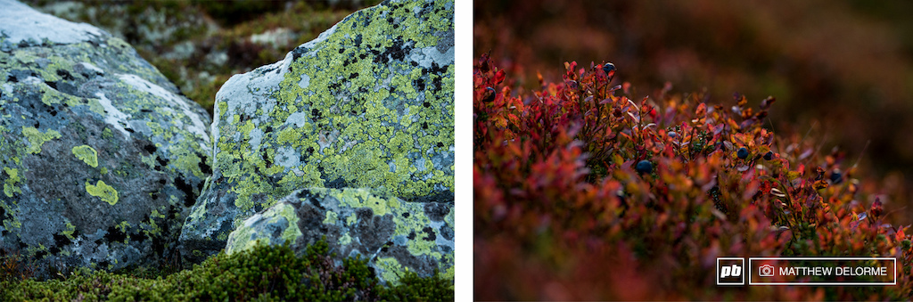 Granite speckled with lichens and blueberry bushes on fire. Norway looks very similar to the far north of New England. It s easy to see how the continents were once joined.