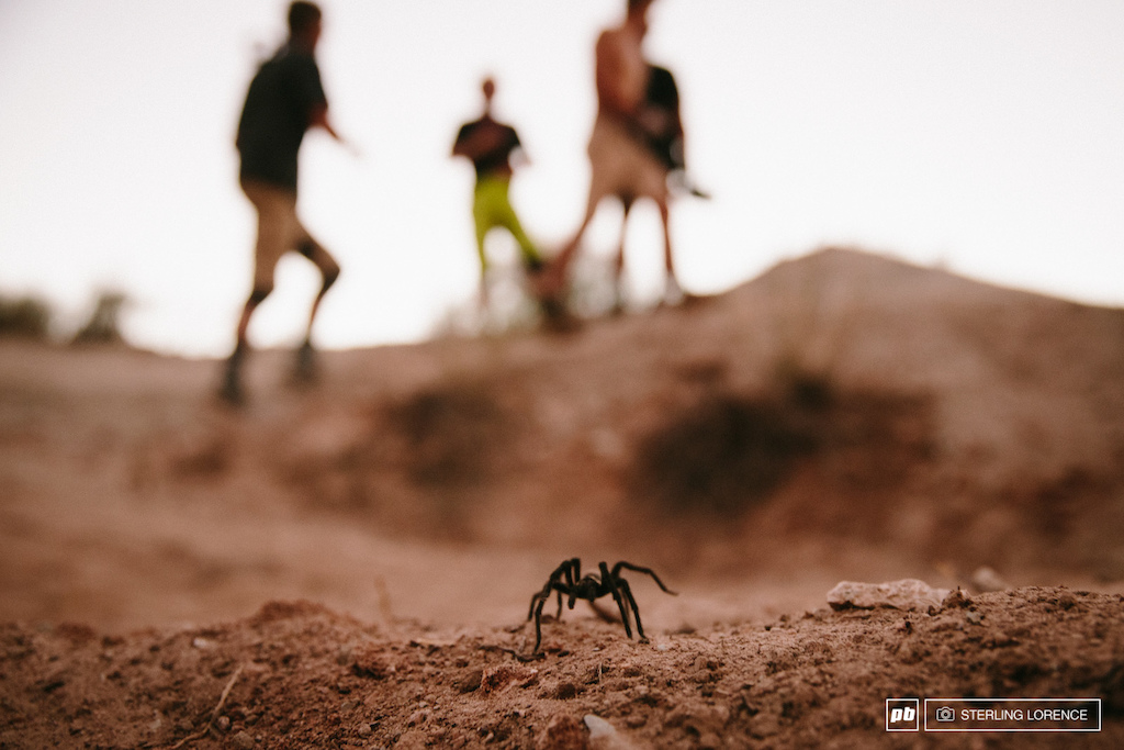 tarantula at 2014 RedBull Rampage in Virgin Utah.