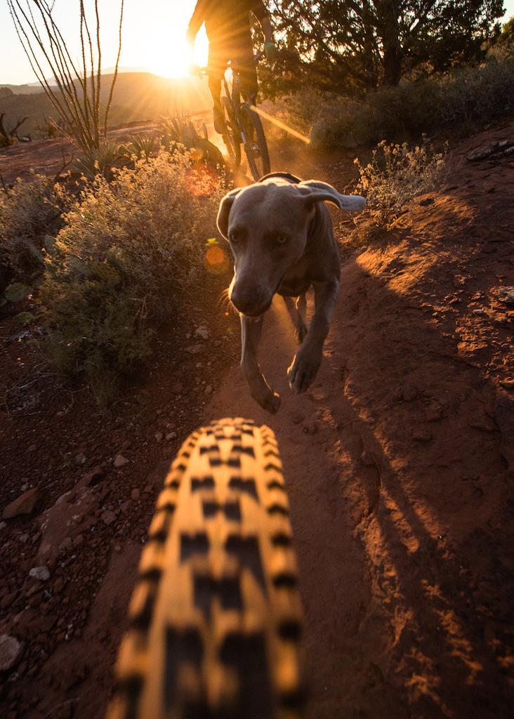 Mountain Biking around Sedona, Arizona with a few locals and their dogs.