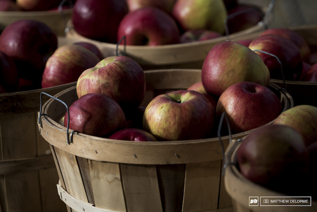 Bushels of apples were brought in to supply the feed stations.