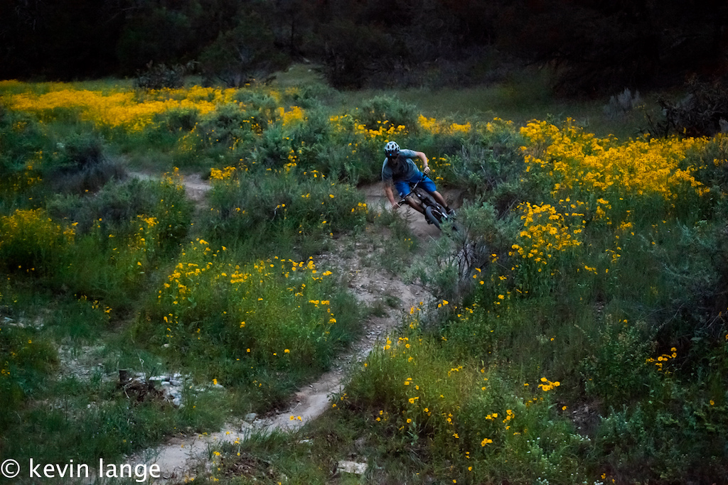 record rains over the summer bring vibrant color to otero canyon, tijeras, new mexico.