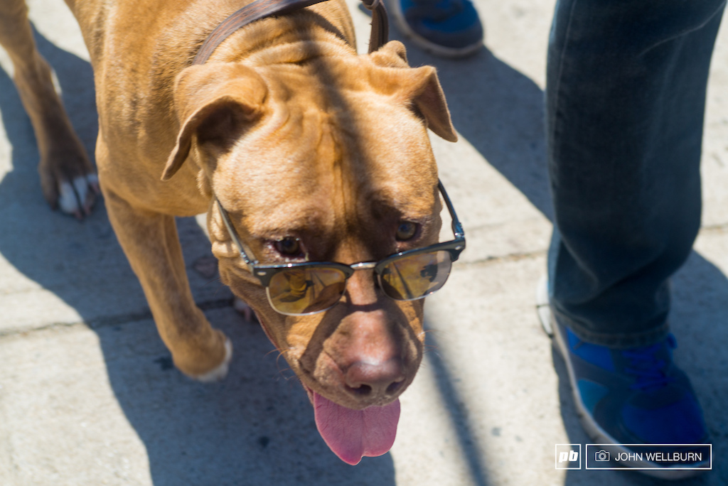 This guy was a little near sighted and the polarized lenses help in for the reflections off the white concrete.
