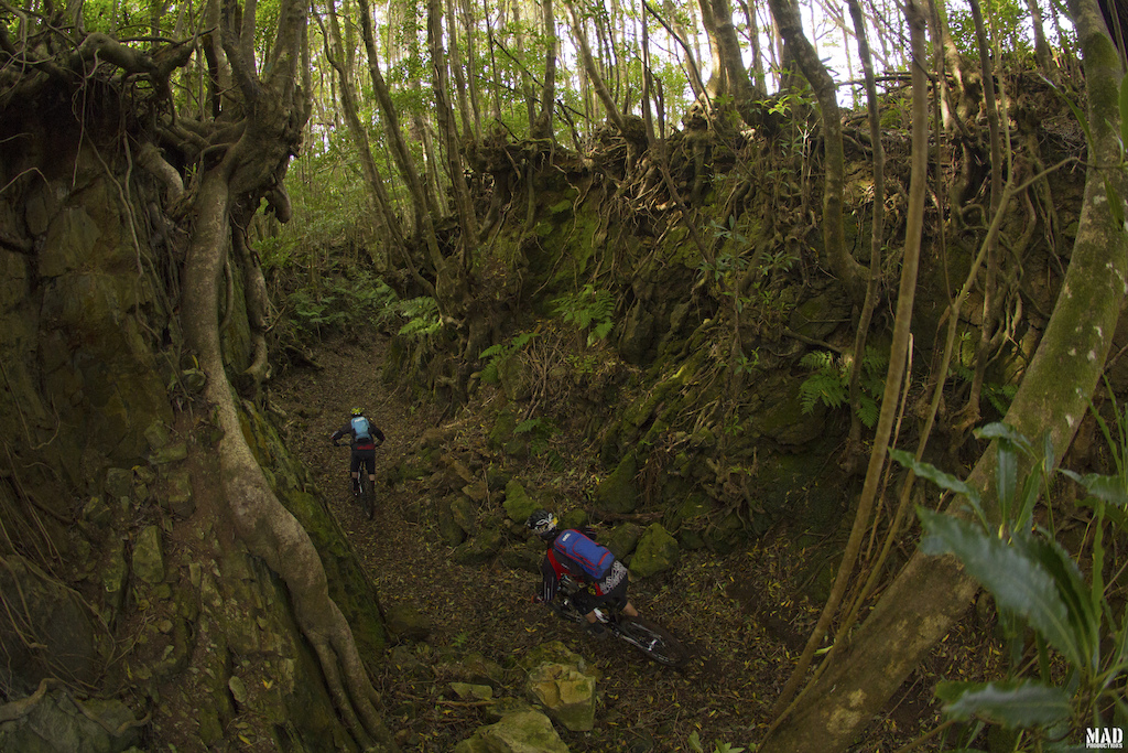 Jungle massive moment at Santa Maria, Azores.