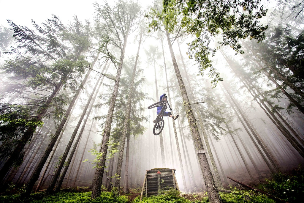 foggy one- footer in a deep fairy tale forest