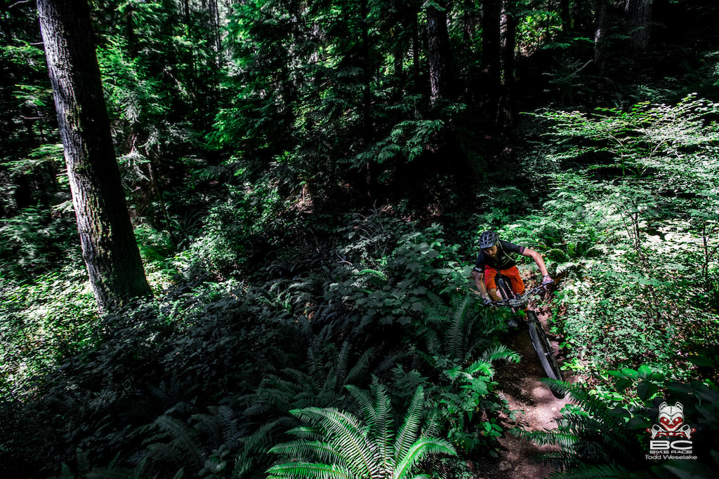 Finding your way through the brush just means point the bike to the clear spot.