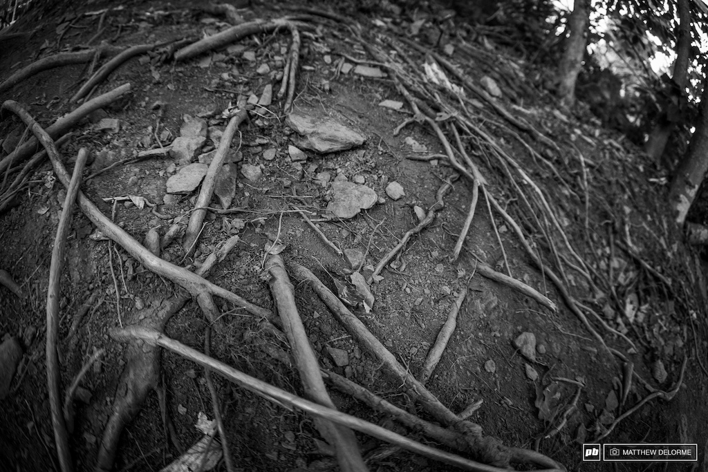 Roots. Rocks. High speed. This track might be short but it s got enough of everything.
