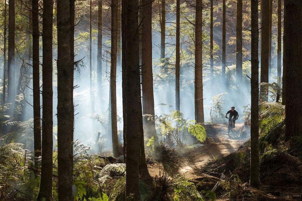 A beautiful morning in Rotorua's Whakarewarewa Forest trail network - awarded gold status by the International Mountain Bike Association. Photo: Graeme Murray (www.graememurray.com)