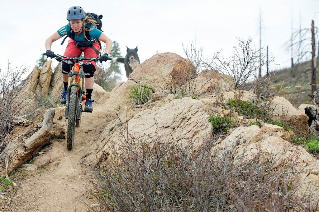 Roscoe the trail dog Photo by Ian Coble
