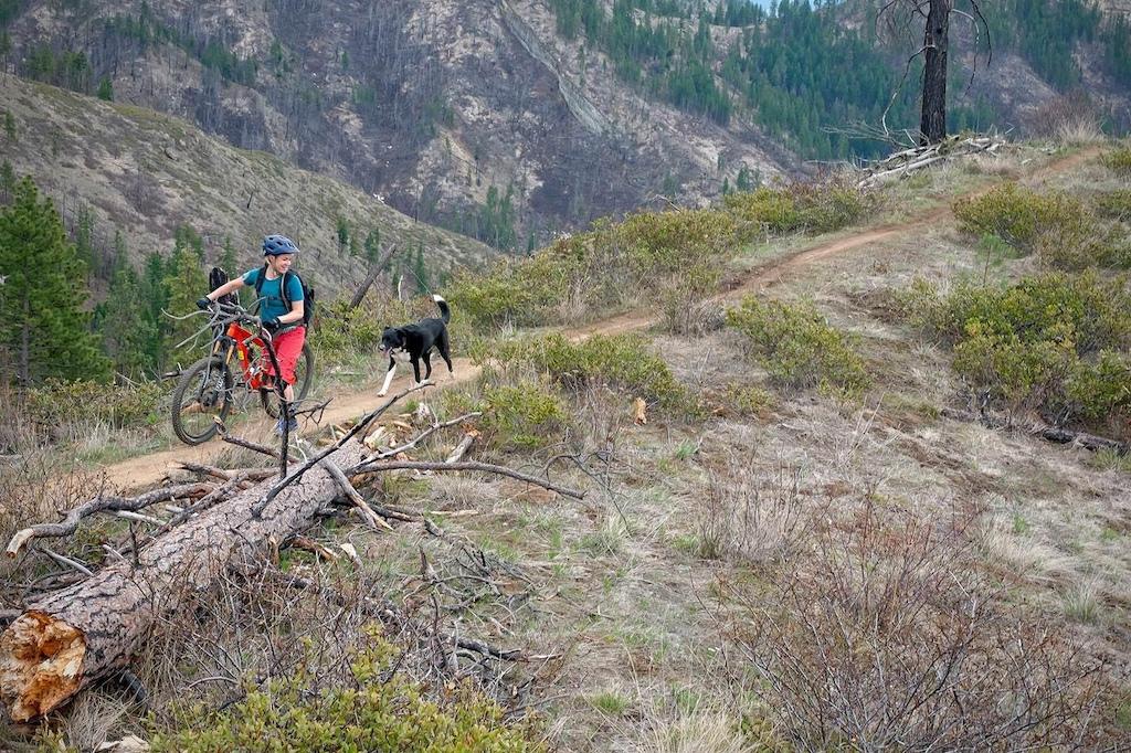 Roscoe the trail dog! Photo by Ian Coble