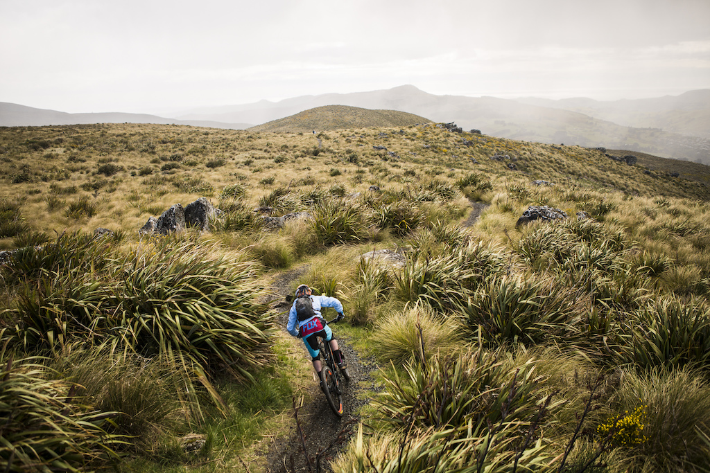 A rider heads through the tussock on the skyline during the 2015 Urge 3 Peaks Enduro mountain biking race held in Dunedin, New Zealand.