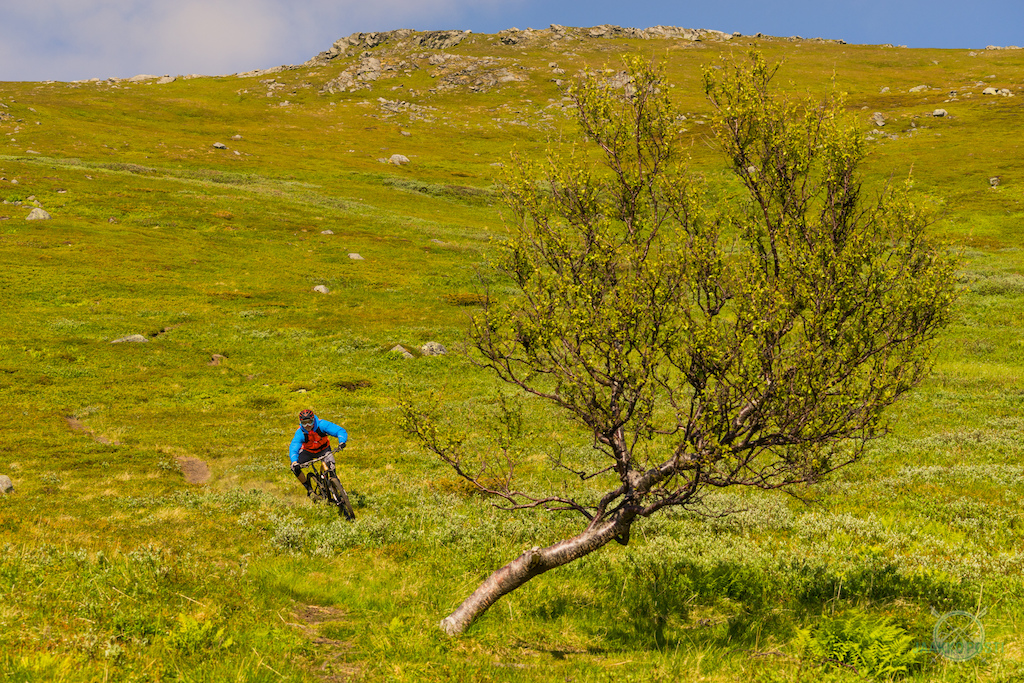 Riding Lofted Norway