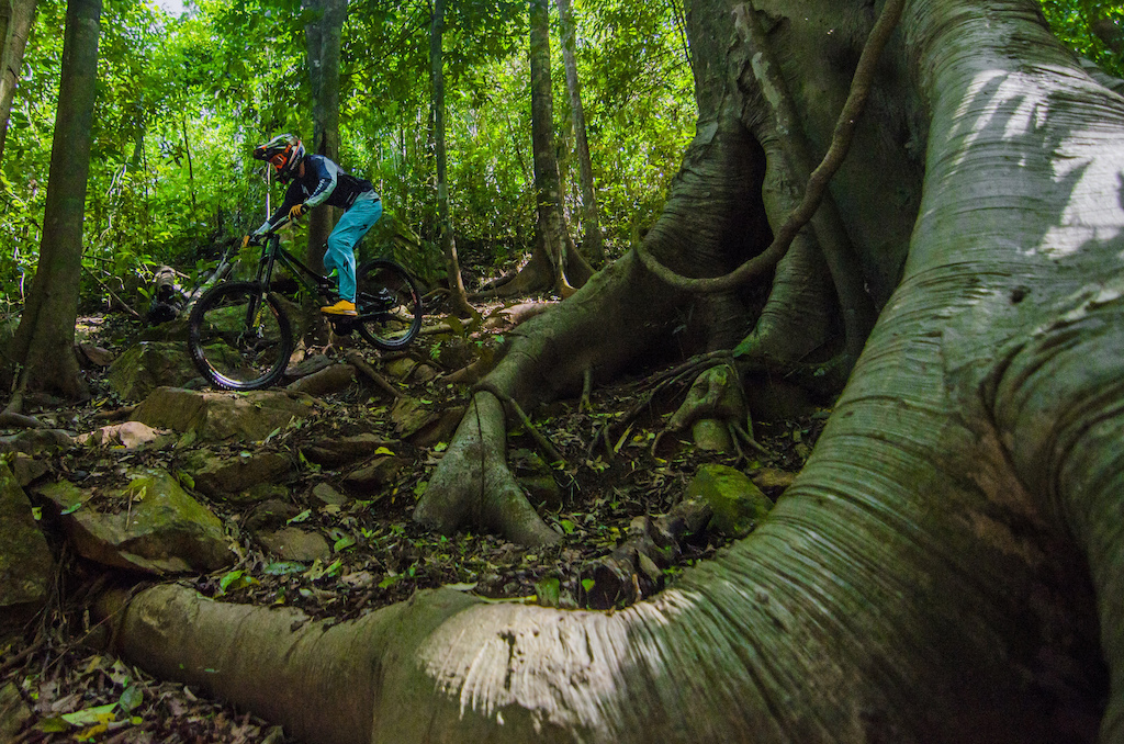 The Alien tree in the dry is almost as scary to ride fast in the dry as it is impossible to ride in the wet. Just one of the many iconic features that line the course - it leaves nothing to the imagination when pondering its namesakes origin.