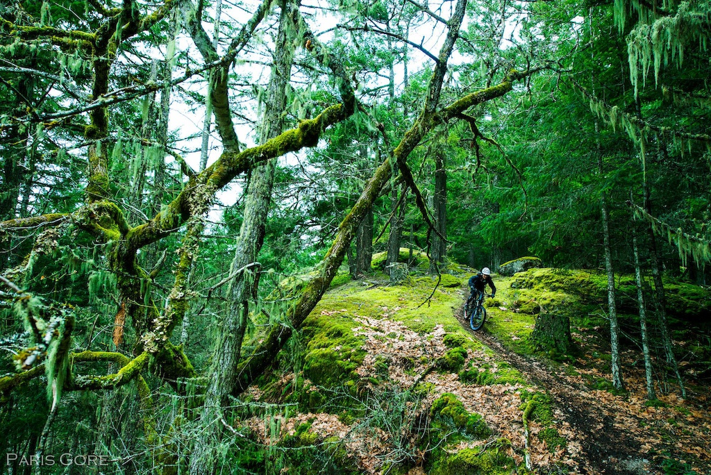 Beverly Seip amidst the moss of Cowichan. Photo by Paris Gore