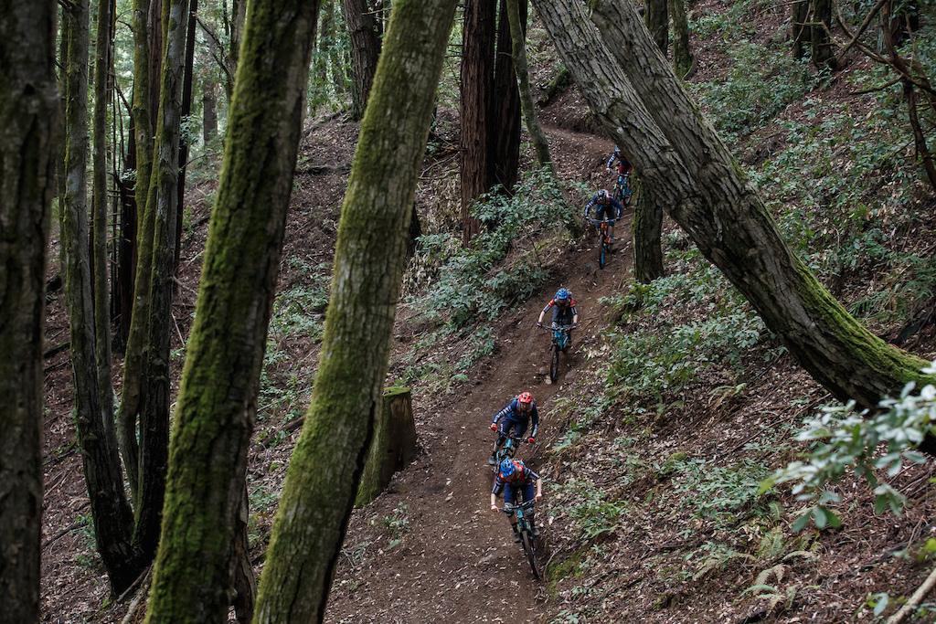 Team train weaving thru the redwoods