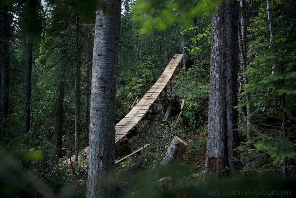 A Massive ladder bridge decending over the trial.