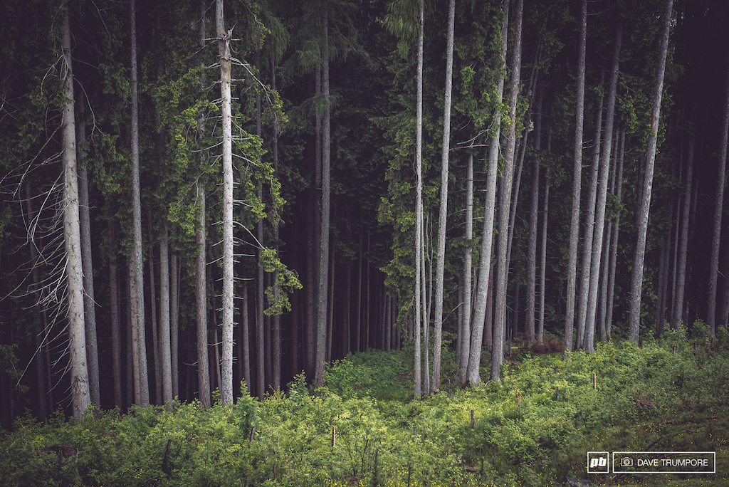 See these beautiful woods just waiting to be ridden through