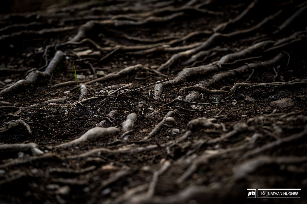 A couple of dense root nests spice up the hardpack in a few places, but it would have been nice to see a couple more and maybe some loam...