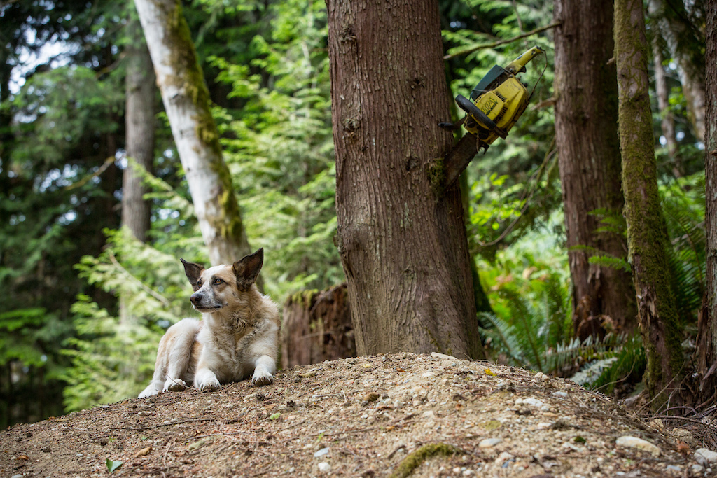 The CGP mascot Scout. She has seen every trail be built at CGP from day 1.