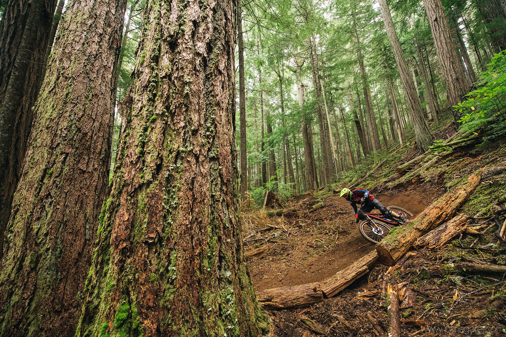 Chris Johnston railing a ceder dusted corner which sits up next to some very old trees.