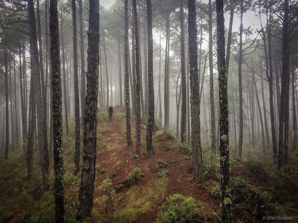 """Reserva Natural """"San Juan del Monte"""". Las Vigas, Veracruz. MX. Noviembre 2016. Descendiendo por el bosque de niebla en bici de montaña."""