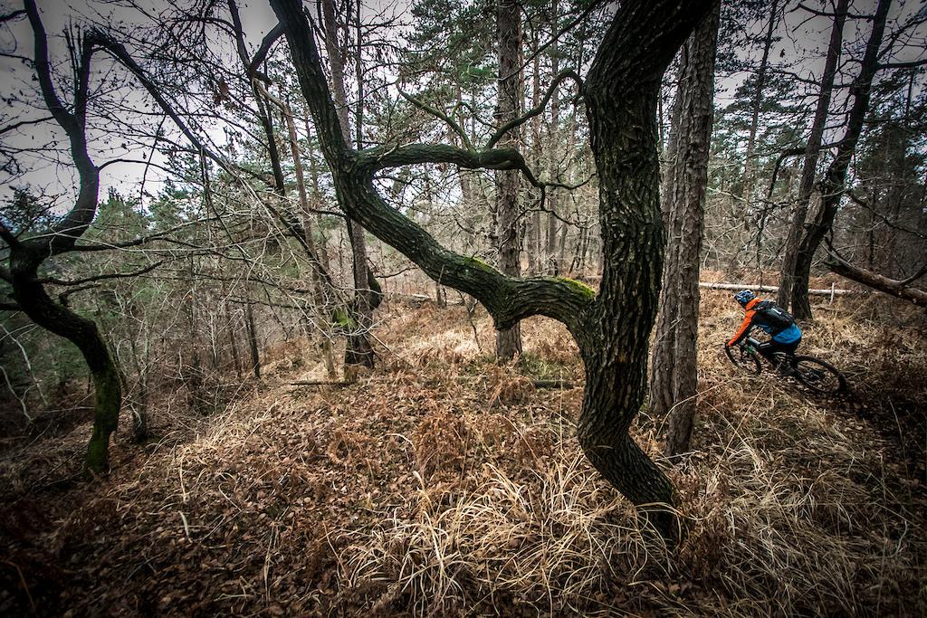 Riding in misty oak forest.