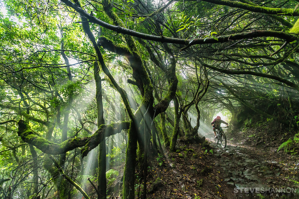 Jungle magic on La Palma.
