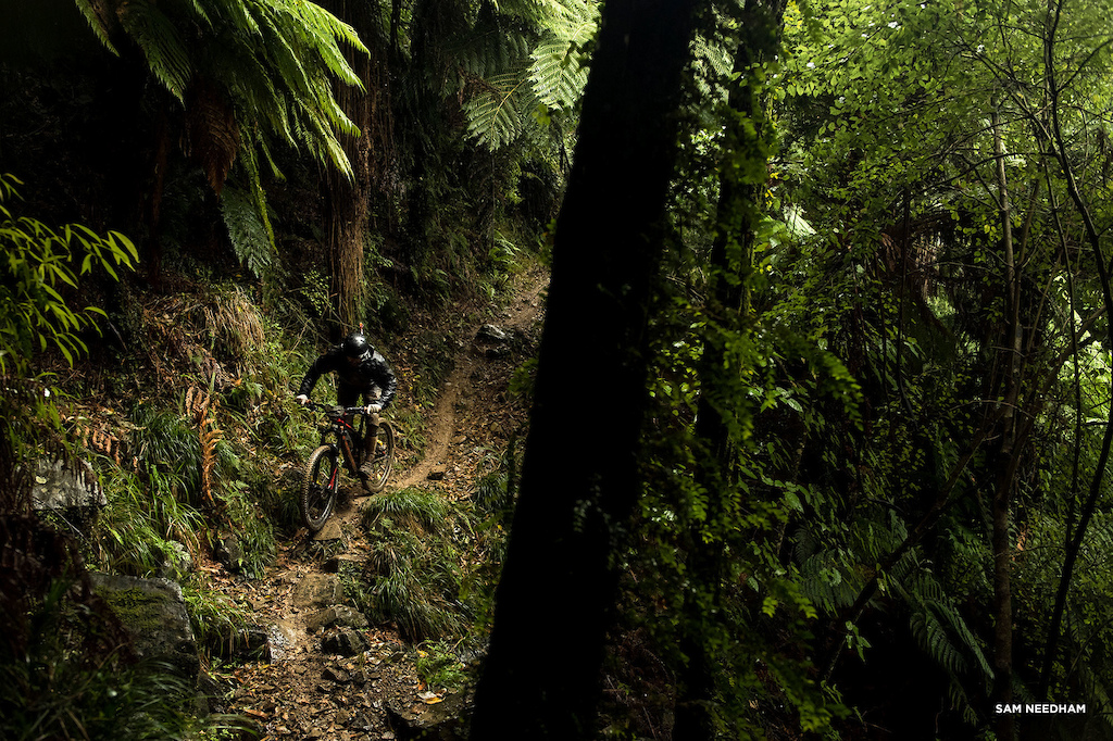 Deep in the NZ jungle.