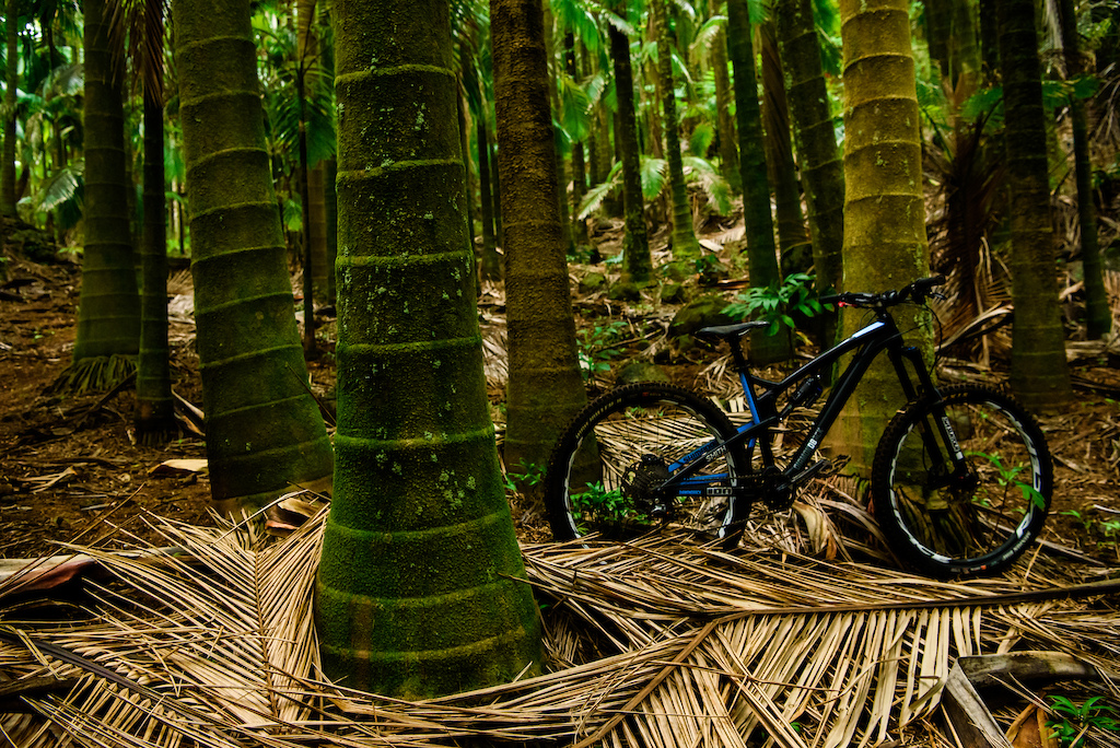 DreamRide II - Photo and Video Epic