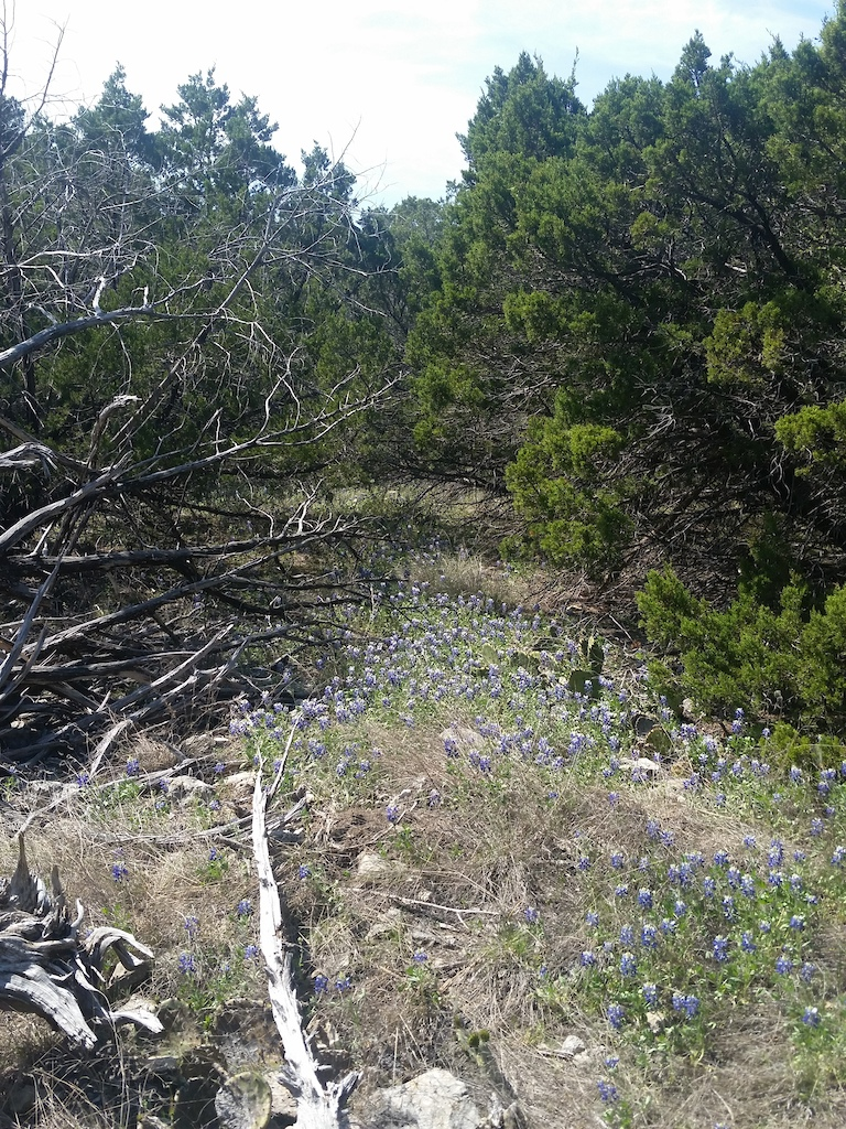 Enjoying the aroma of the Bluebonnets on our little 5 mile hike today