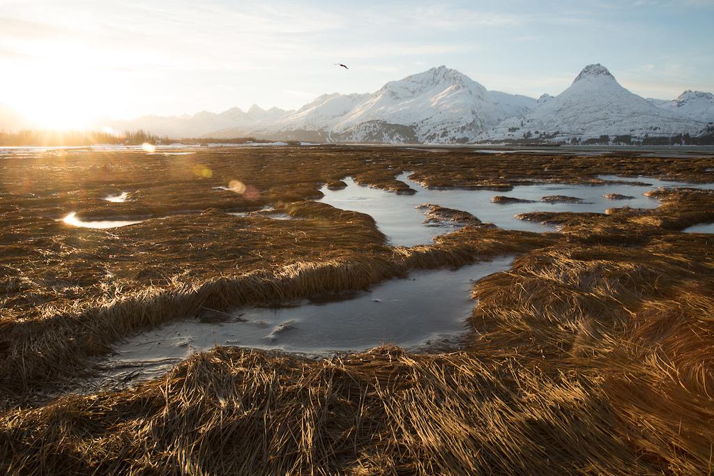 Frozen tidal pools on the Port Valdez. Photo Robb Thompson