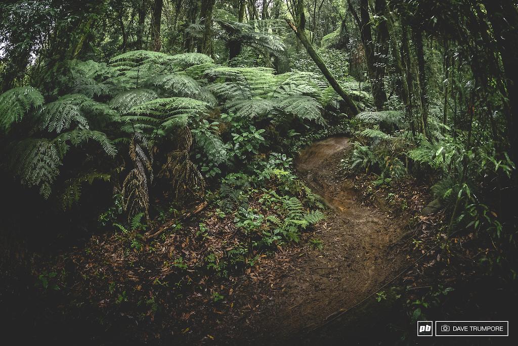 Photo Epic Race Day - EWS Round 1 - Crankworx Rotorua