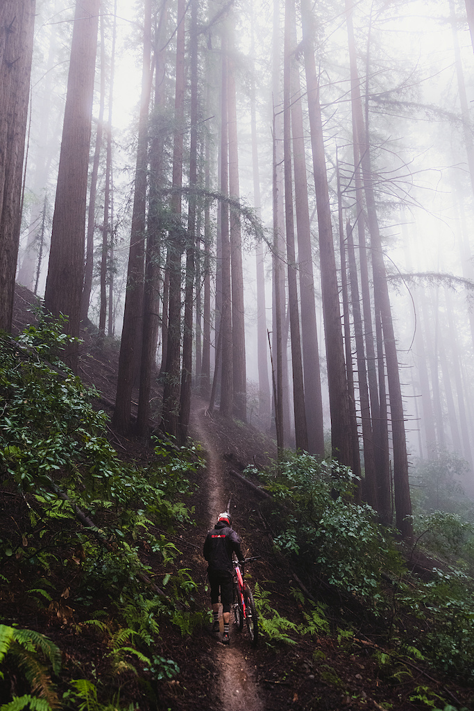 Redwood Cruzin'