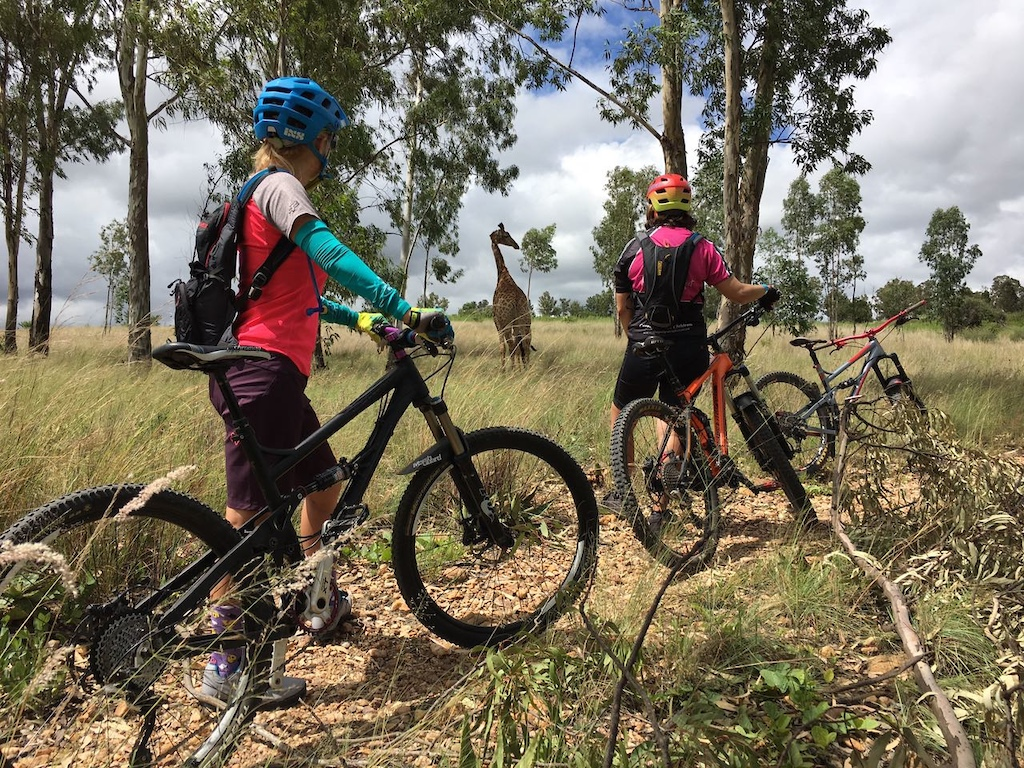 Morning ride. Stopped to check out the giraffe! #gravitygirls #MTBSA