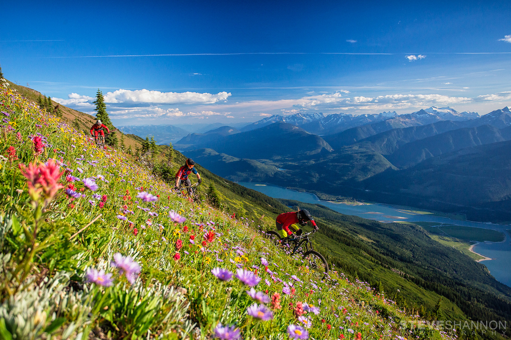 Wildflowers and mountain views.